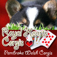 Royal Hearts Corgis, Pembroke Welsh Corgis