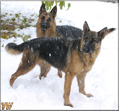 Tanna & Rocky Enjoying The Snow
