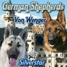 Silverstar and Von Wenger German Shepherds